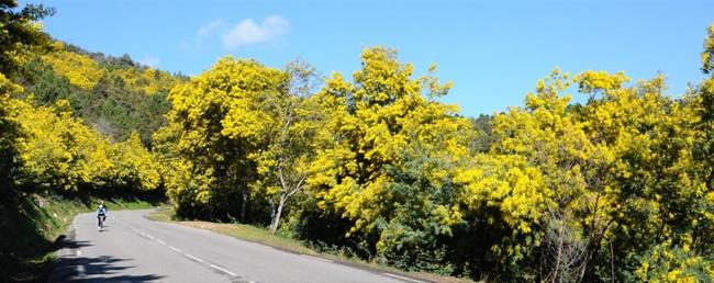 """Résultat de recherche d'images pour """"bornes la route du mimosa pinterest"""""""